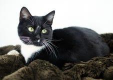 Smoking Cat Adoption Photo foto de stock royalty free