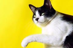 Smoking Cat On Colorful Background Animali, concetto degli animali domestici fotografia stock libera da diritti