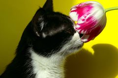Smoking Cat Sniffing Flower royalty-vrije stock afbeeldingen