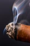 Smoking cigar Stock Image