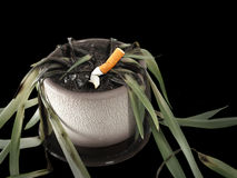 Smoking kills. Cigarette in a plant on black background Royalty Free Stock Images