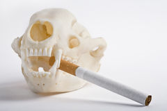 Smoking kills. Badger skull holding a cigarette Royalty Free Stock Images