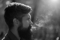 Smoking man in forest Royalty Free Stock Photography