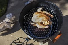 Smoking meat outside - a whole raw chicken with spices sits on the top rack of an open barrel electric smoker with a slab of meat royalty free stock image