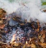 Smoking pile Stock Image