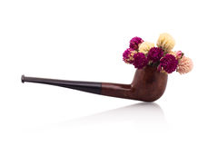 Smoking pipe as flower pot Royalty Free Stock Photography