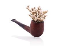 Smoking pipe as flower pot Royalty Free Stock Image