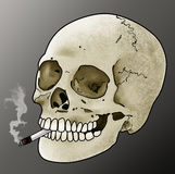 Smoking Skull. An illustration of a human skull smoking a cigarette Royalty Free Stock Photo