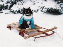 Smokingkat die sjaal op uitstekende houten slee dragen Stock Fotografie