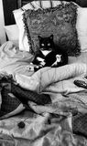 Smokings-Katzenmorgenüberraschung Stockfoto
