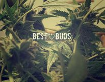Smoky Best Buds Royalty Free Stock Images