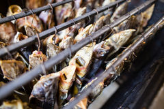 Smoky fish in smokehouse. Fresh fish smoke in the smoking house in smoke Stock Image