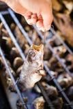 Smoky fish in smokehouse. Fresh fish smoke in the smoking house in smoke Royalty Free Stock Image