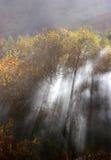 Smoky forest. Smoke through tree stock images