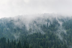 Smoky forest Stock Image