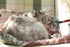 Smoky furry cat in the yard stock photo