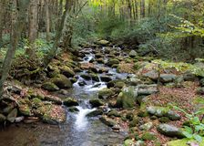 Mountain creek flowing over moss covered rocks with fall foliage Stock Images