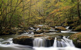 Smoky Mountain Fall Stream Stock Photos