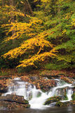 Smoky Mountain Fall Stream. A beautiful mountain stream in smoky mountain National Park Stock Image
