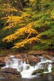 Smoky Mountain Fall Stream Stock Image