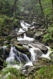 Smoky Mountain Spring. Spring in the Smoky Mountains Royalty Free Stock Image