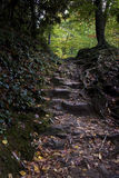 Smoky Mountain Stairway Royalty Free Stock Photography