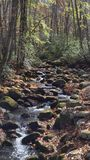Smoky mountain. Stream late fall Stock Photography