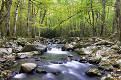 Smoky Mountain Stream. A Stream in Smoky Mountain National Park Royalty Free Stock Images