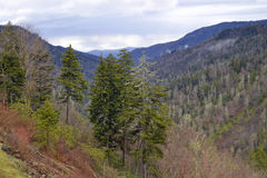 Smoky Mountains Royalty Free Stock Photo