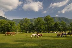 Smoky Mountains Cades Cove in Late Spring. A scenic view of Cades Cove and Horses in Great Smoky Mountains National Park, Tennessee, USA Royalty Free Stock Photos