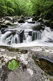 Smoky Mountains Waterfall Royalty Free Stock Photography