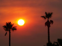Smoky Orange sky and sun with palm trees Royalty Free Stock Photography