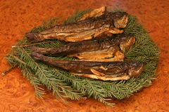 Smoky Trout. On Fir Stock Photography