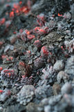 Smolder coals Stock Photo