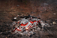 Smoldering fire in a pine forest. Spring day lit a fire in the forest Stock Photography
