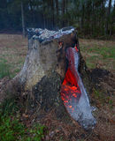 Smoldering stump Stock Photo