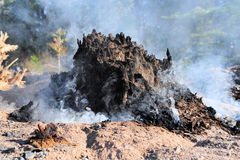 Smoldering Tree Stump. Tree stump burnt and smoking after a forest fire Royalty Free Stock Photos