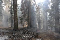 California Wildfires Royalty Free Stock Image