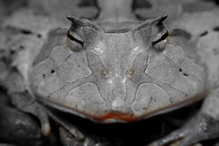 Smooches ! Prince ou princesse de grenouille Photographie stock