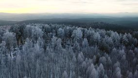 Smooth Aerial head over winter cinematic drone shot of norwegian forest in Oslo at sunset. Flying camera 4K footage. stock video footage