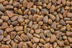 Background of pine nuts. Smooth brown layer of cedar nuts. A useful natural product, a source of protein and vitamins. Daylight royalty free stock photos