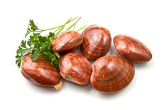 Smooth clams Royalty Free Stock Photography