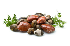 Smooth clams royalty free stock image