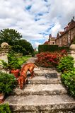 Red labrador sniffing around on some old stone steps. A smooth coated russet-colored labrador dog is exploring and sniffing around on some old stone steps in royalty free stock photography