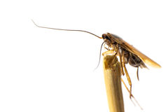 Smooth cockroach Royalty Free Stock Photography