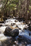 Smooth creek water over rocks in a forest. Forest scene with smooth water creek in Yosemite National Park, California Royalty Free Stock Photo