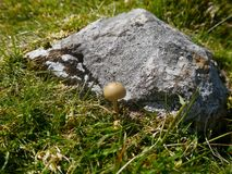 Smooth domed mushroom by boulder Stock Photo