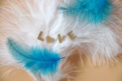 Smooth Feathers with The Words Love. Smooth white and blue feathers with the word Love on background stock image