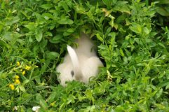 Puppy hiding Royalty Free Stock Image