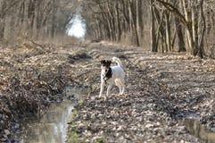 Muddy Dog Stock Photo